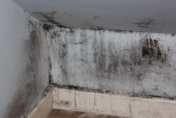 Mold & Mildew: Where does it come from and how do you get rid of it?